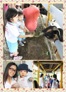 animal farm kids singapore (2)